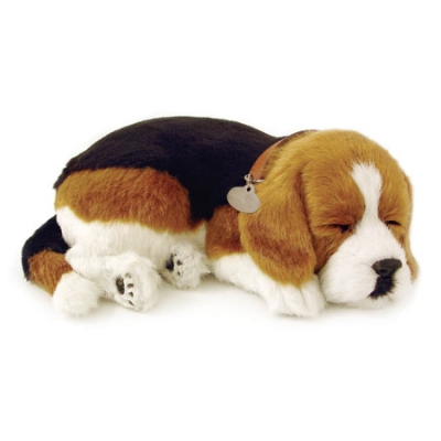 perfect petzzz beagle