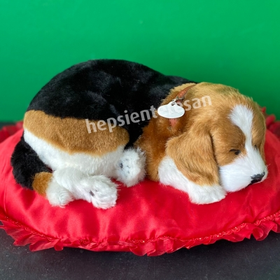 perfect petzzz beagle