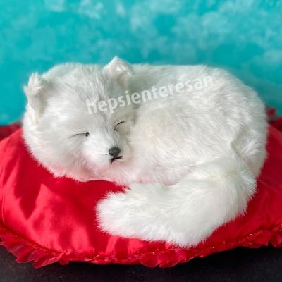 perfect petzzz beyaz tilki