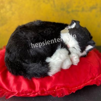 perfect petzzz black/white cat