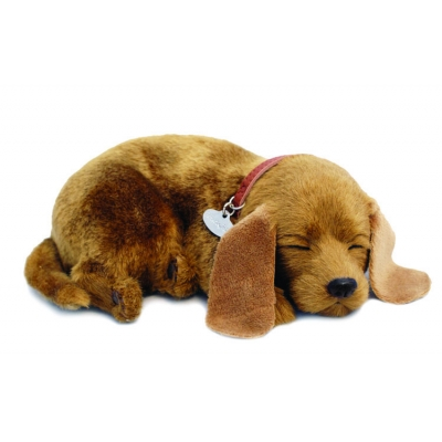 perfect petzzz mutt